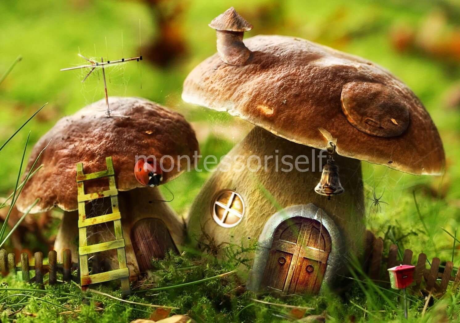 Картинки и название грибы. грибы Фото со стоков и изображения