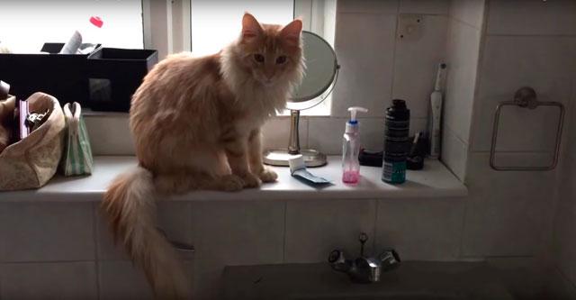 Кот прибирается в ванной