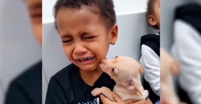 Мальчику подарили щенка