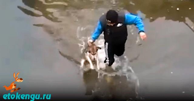Спасение щенка из реки