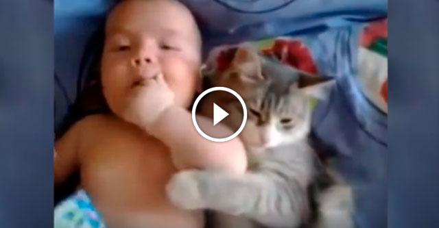 Кот ластится к ребенку