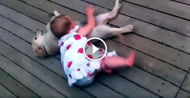 Встреча девочки и щенка