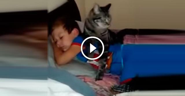 Кот рад возвращеню мальчика домой