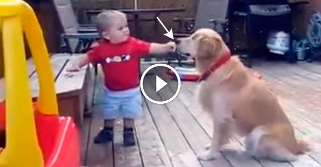 Мальчик угощает собаку