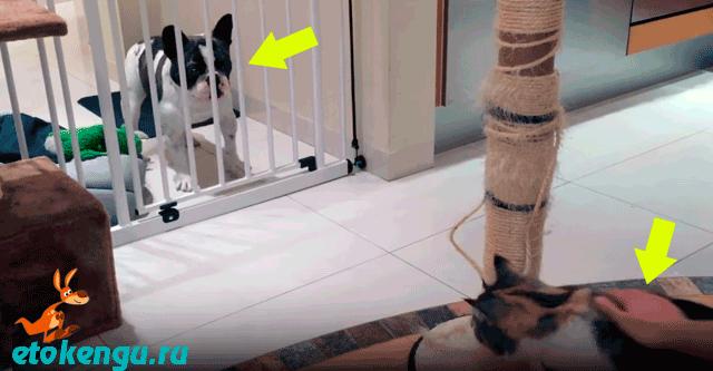 Пёсик не любит, когда гладят кота