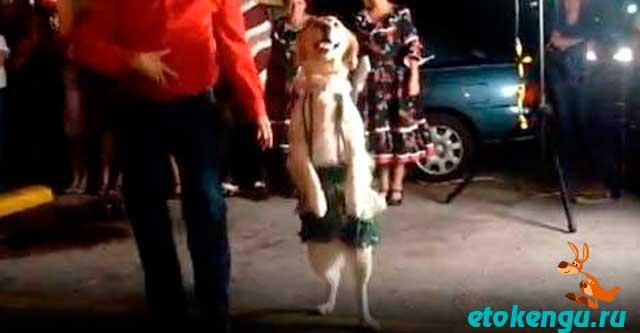 Собака на танцполе