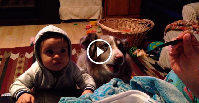 Собака сказала мама