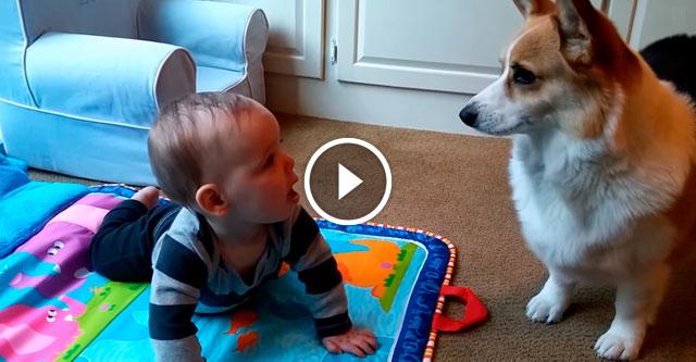 Пес зовет малыша играть