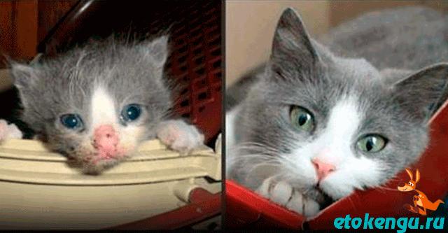 15 котов, которые обрели хозяев