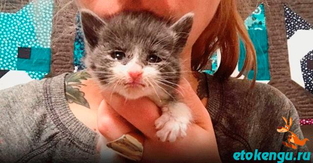 Девушка спасает котят