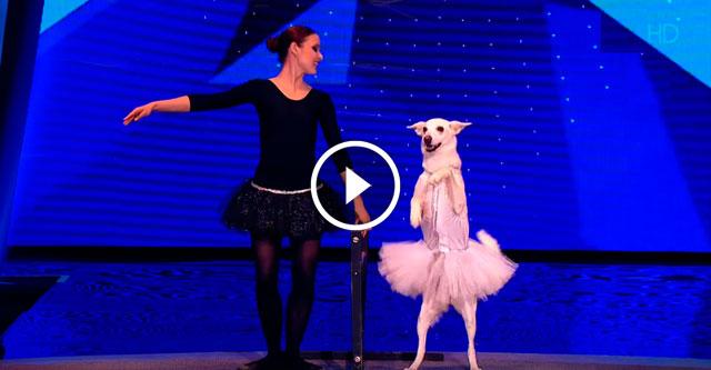 Собака танцует балет