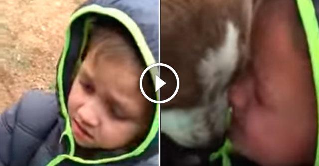 Встреча ребенка с потерявшимся псом