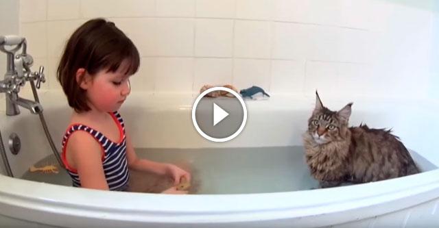 Кошка нашла подход к девочке с аутизмом