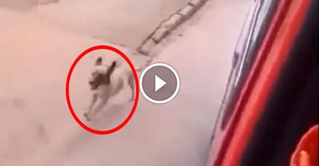 Пёс бежал за машиной скорой помощи
