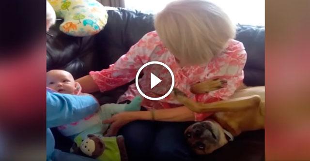 Собака притворяется младенцем