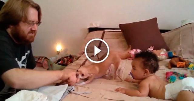 Чихуахуа защищает ребенка