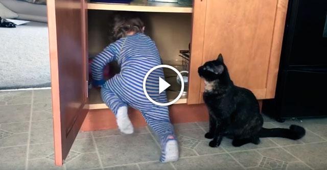 Кот обхитрил ребенка