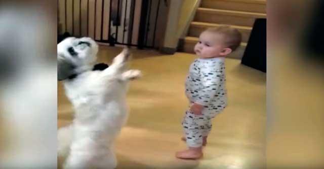 Малыш танцует с щенком