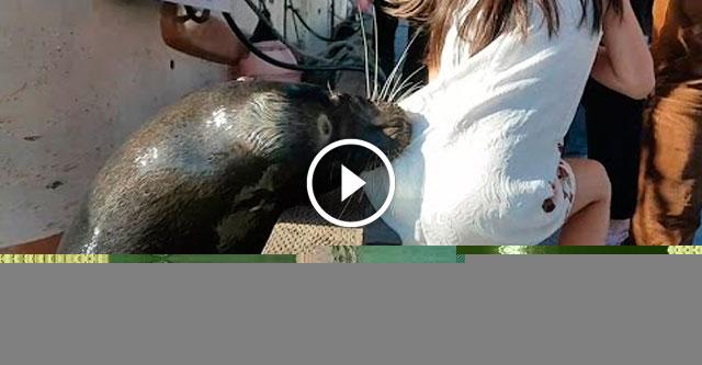 Морской лев напал на ребенка