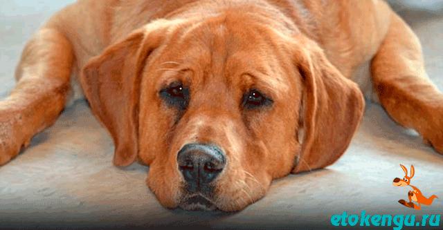 Особенный пёс из приюта почти потерял надежду