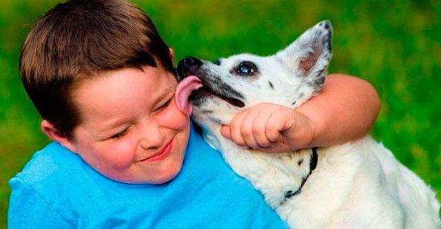 Почему нельзя позволять собаке облизывать ваше лицо