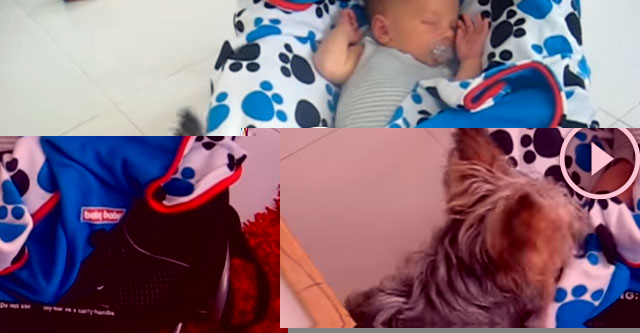 Пёсик укрывает младенца