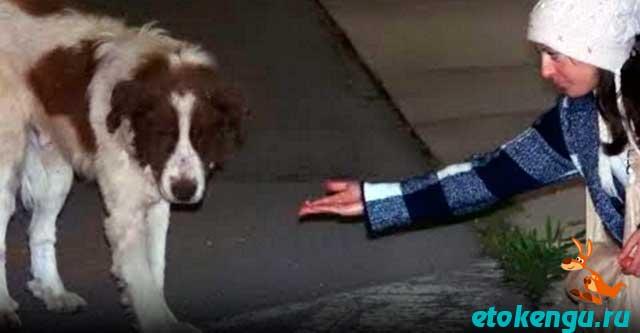 Пёс не верил людям