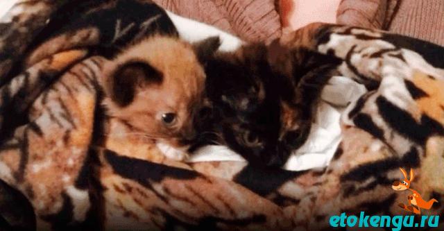 Пёс спас 2-х котят