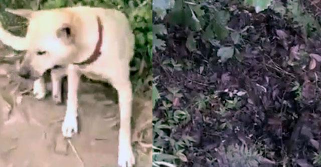 Собака выкопала ребенка