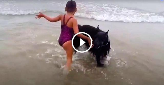 Собака не пускает девочку в воду