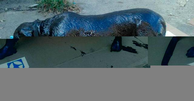 Собака покрытая смолой бродила по улицам