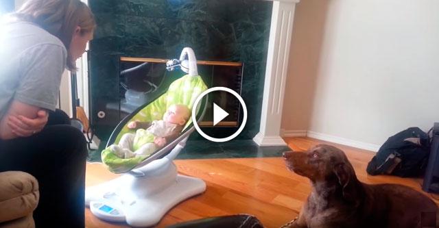 Собака ревнует