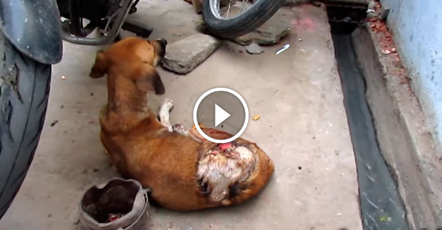 Неизвестный подонок облил собаку кислотой. Её ждала мучительная смерть, если б не ЭТИ ребята...