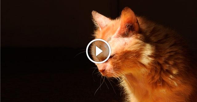 17-летнюю кошку выбросили на улицу