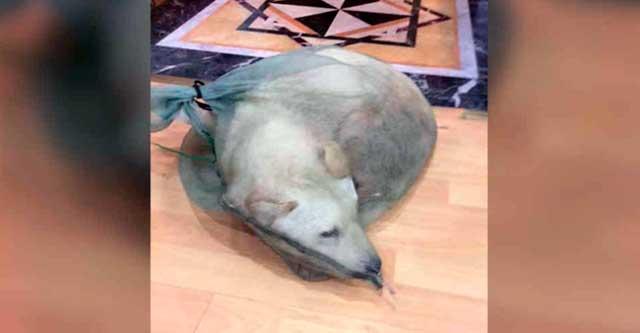 В Китае спасли пёсика, которого продавали на мясо
