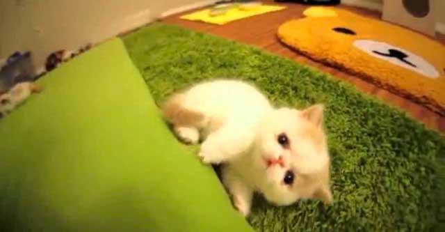 Котёнок гавкает