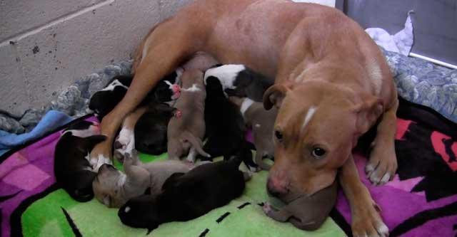 Собаку с 10 щенками выкинули на улицу