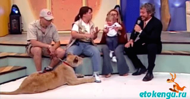 Львица напала на ребенка