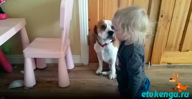 Собака разбила тарелку малышки