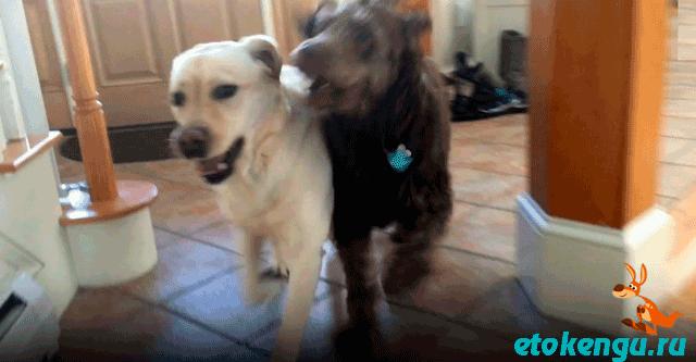 Собаки не виделись много месяцев
