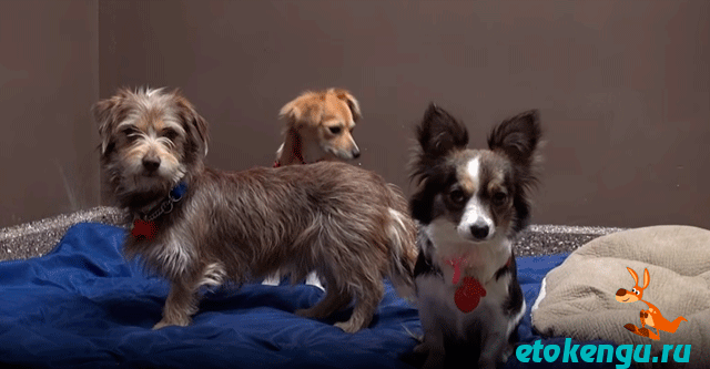 Хозяин выгнал трёх своих собак