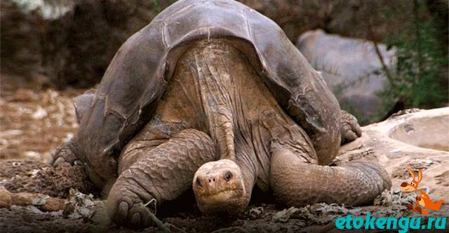 В год на планете вымирает по два вида позвоночных