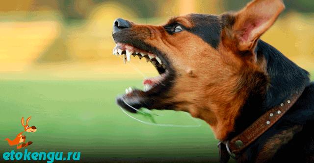 Почему собака лает на людей