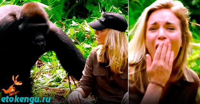 Встреча с гориллой через 6 лет
