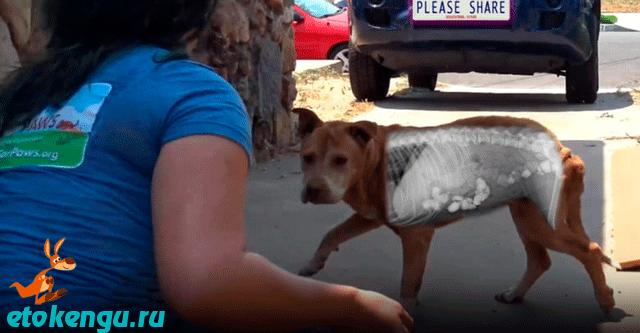 Голодный бездомный пес ел камни