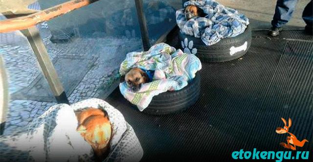 Работники автовокзала организовали для собак места для ночлега