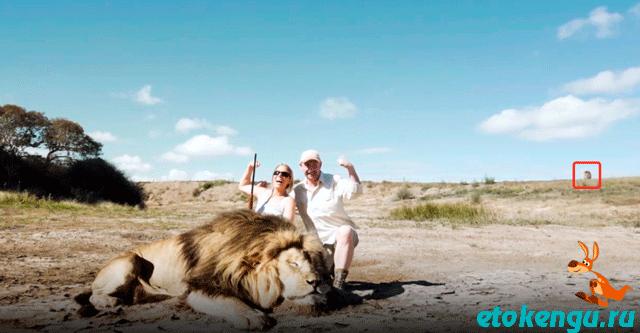 Селфи с убитым львом